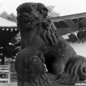 狛犬たちのモノローグ  File973  諏訪神社