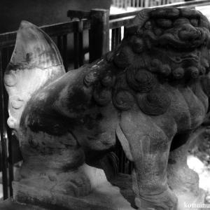 狛犬たちのモノローグ  File1013  雑司ヶ谷鬼子母神