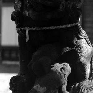 狛犬たちのモノローグ  File1049  八幡神社