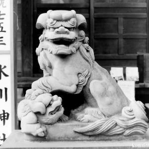 狛犬たちのモノローグ  File815  西新井氷川神社