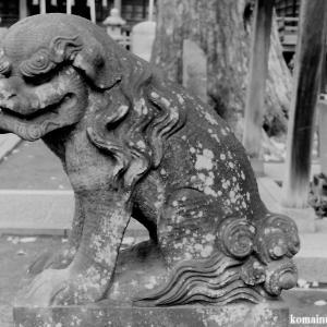 狛犬たちのモノローグ  File819  赤塚諏訪神社  其の壱
