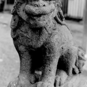 狛犬たちのモノローグ  File829  柏木神社