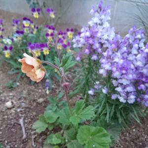 4月28日の庭