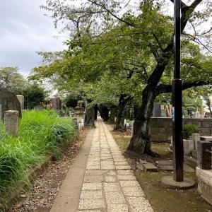 谷根千散歩→神楽坂へ