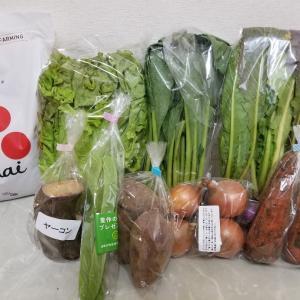 自然栽培のお野菜