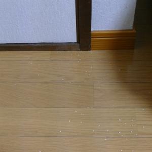 奥武蔵・顔振峠 その8