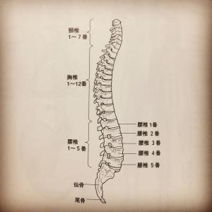 脊柱も日々の体調も積み木のように