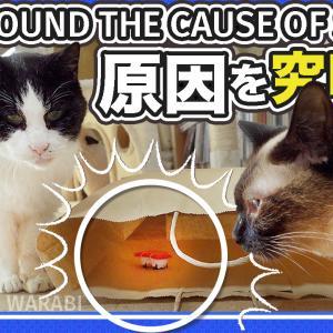 猫のきゅうめいさん