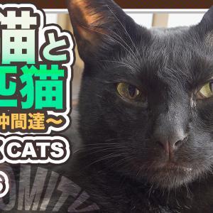 ゆかいつうかい黒猫かい