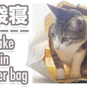 かみと猫と袋
