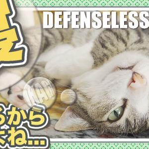 猫スリープ