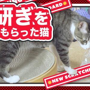 猫と丸い爪研ぎ