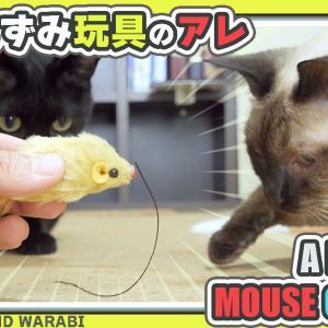 猫オモチャのちゃちゃちゃ