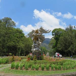 バリ植物園のガジュマル