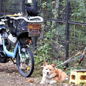 愛犬の奉仕活動散歩 「上下関係」
