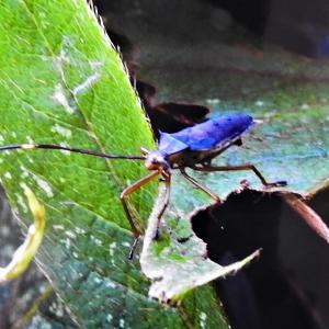 甲虫類カミキリ、タマムシ.コガネ 年表写真図鑑