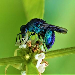 昆虫記 大青蜂 感動感激感謝写真