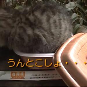 猫丼ダブルでご注文