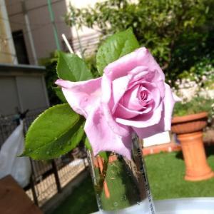 今日の一輪「薔薇ブルー・ムーン」