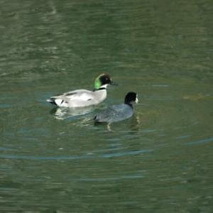 奥須磨公園の野鳥たち2021.1.26