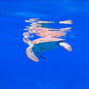 ウミガメの呼吸