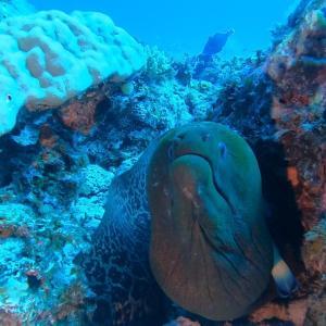 巨大ウツボとウミガメ