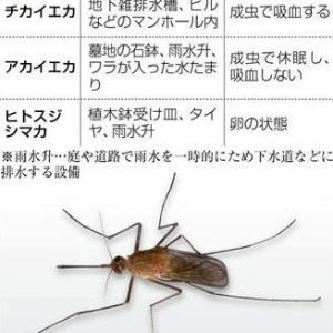 ☆高層マンションに蚊はいないって?☆