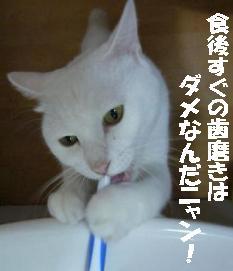 ☆食後すぐの歯磨きは歯を腐らすって本当?!☆