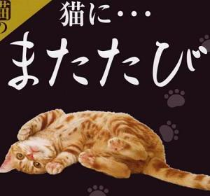 ☆猫にマタタビ!じゃあ犬は?☆