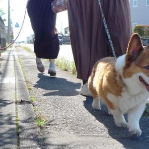 ずっと一緒に散歩できますよ~に
