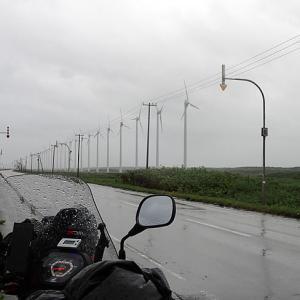 雨ガエル天気予報に泣く・・・(泣)