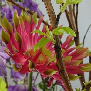 早春の庭・・小雨の中