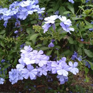 今咲いてる花を 見て (◕ᴗ◕✿)