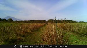 今週のカシス畑(また台風)
