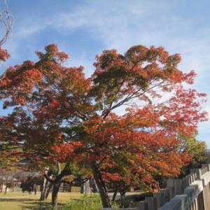 紅葉の城跡