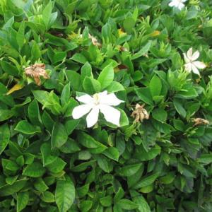 甲府城に咲く花