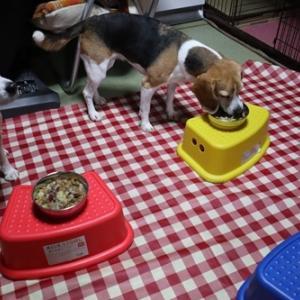 早食いは卒業(≧◇≦)