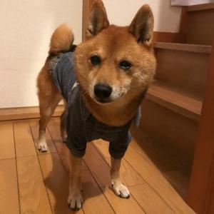 明日は駒沢わんこ祭りに行くよ