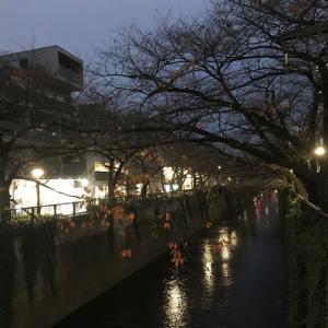 目黒川柴散歩 寒いから散歩は短め