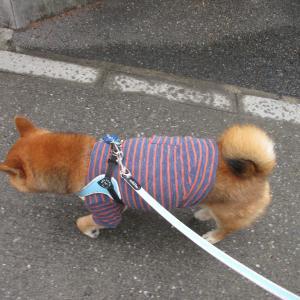 中目黒公園柴散歩 小雨の朝散歩