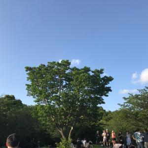 西郷山公園柴散歩 ピクニック日和