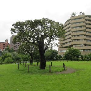 中目黒公園柴散歩 雨上がりの散歩
