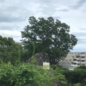 西郷山公園柴散歩 雨上がりは蒸し暑い