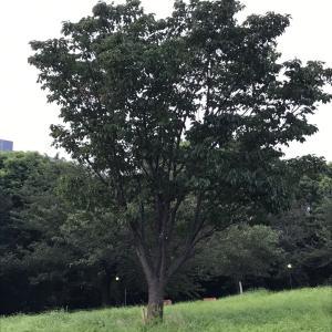 西郷山公園夕散歩 暑くてもおやつは欠かせない