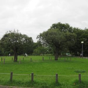 中目黒公園柴散歩 柴っ子がたくさん