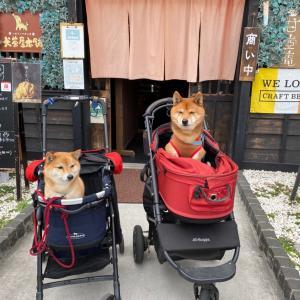 ワンコの入れるお店 犬茶屋本舗ふたたび