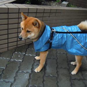 回顧録 雨の目黒川散歩