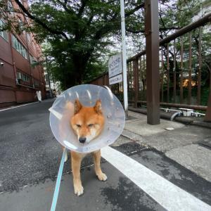 雨が止んだらお散歩