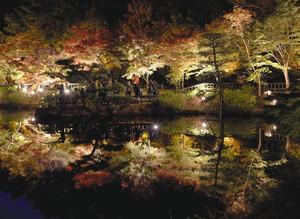 名古屋市千種区/東山植物園・紅葉ライトアップ始まる