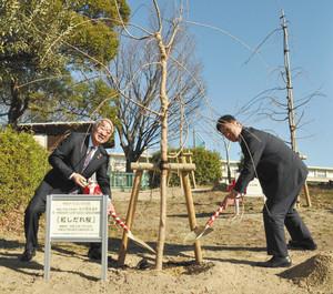 半田市有脇町/石川昂弥選手の活躍願い桜を植樹